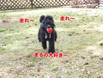 009_20111205071326.jpg