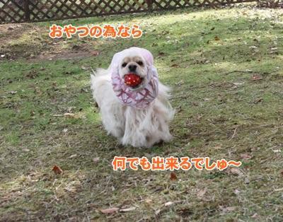 010_20111205071326.jpg