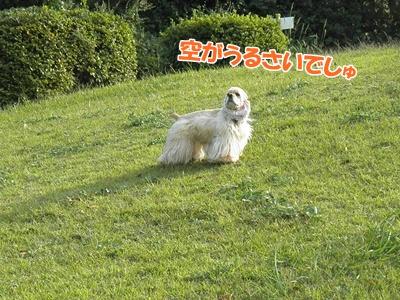 012_20111017213621.jpg