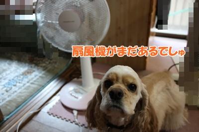 012_20111126163820.jpg