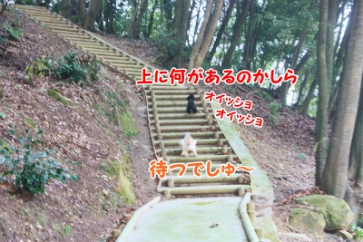 012_20120109093500.jpg