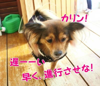 012_20120124201220.jpg