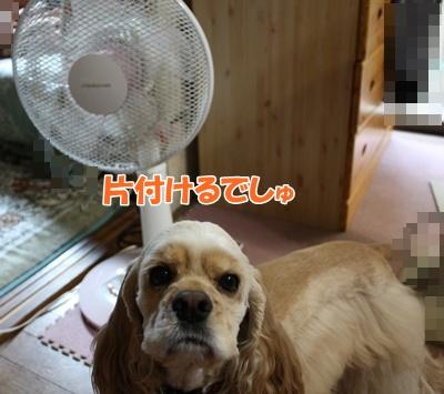 013_20111126163820.jpg