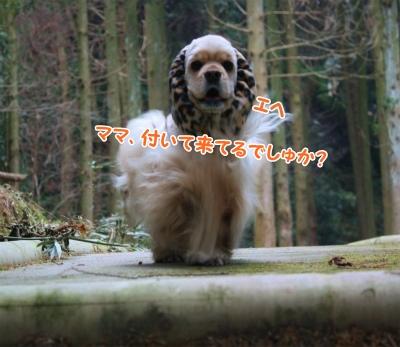 014_20120109093817.jpg