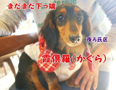 014_20120124201220.jpg