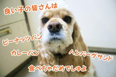 014_20120320204220.jpg