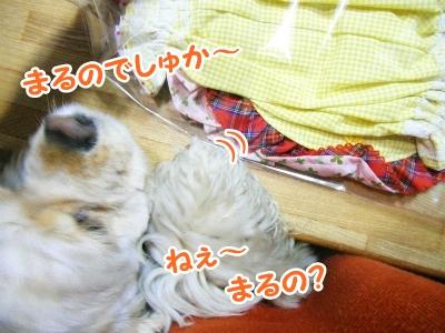 014_20120322214934.jpg