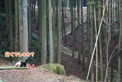 015_20120108211638.jpg