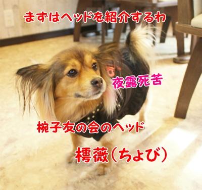 015_20120124201220.jpg