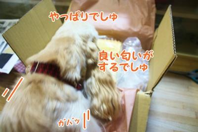 015_20120205172212.jpg