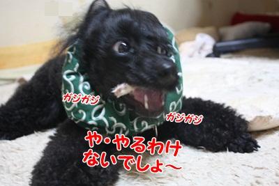 017_20111211212405.jpg