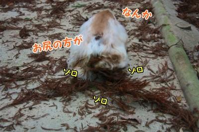 017_20120108211638.jpg