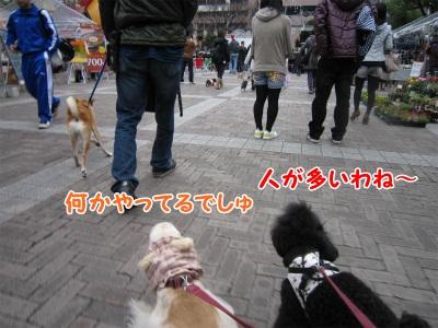018_20111217201147.jpg