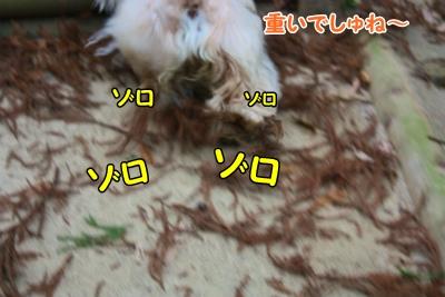 018_20120108211752.jpg