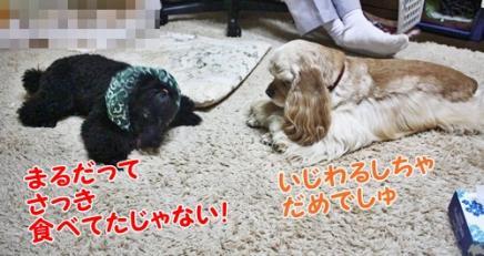 021_20111211212511.jpg