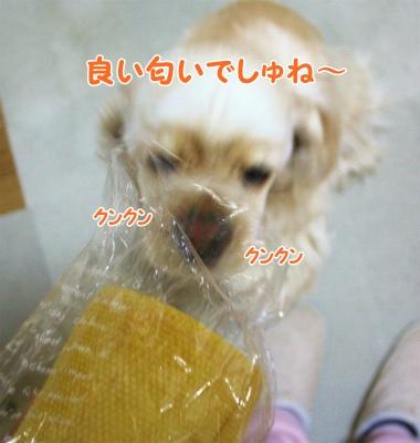 021_20120205172308.jpg