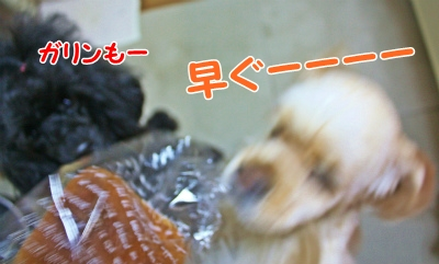 023_20120205174533.jpg