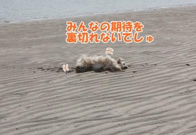 028_20110926221244.jpg