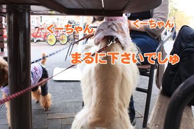 029_20111204151211.jpg