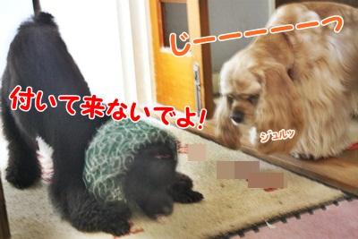 030_20111211212619.jpg