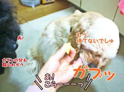 030_20120205172550.jpg