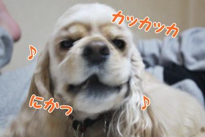 031_20111211212618.jpg
