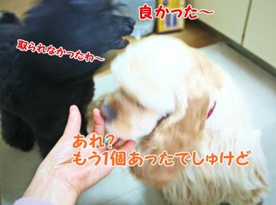 031_20120205172550.jpg
