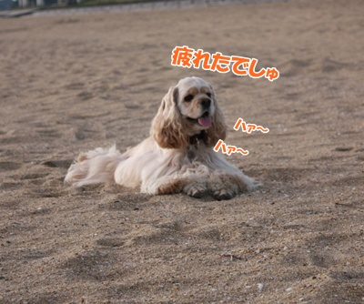 032_20111121215423.jpg