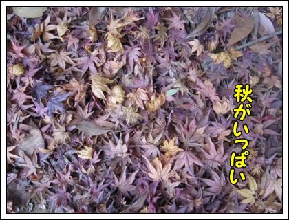 033_20111217201259.jpg