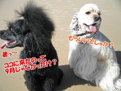 036_20111012233748.jpg
