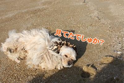 036_20111206232833.jpg