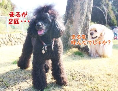 040_20120219234545.jpg