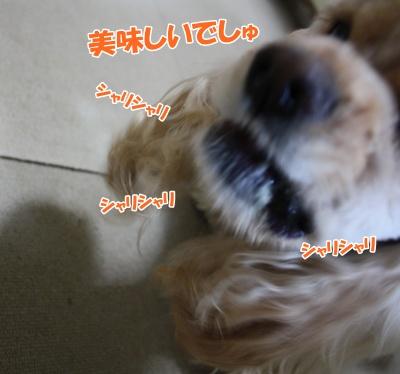 041_20111126164103.jpg