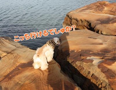 041_20111207214410.jpg