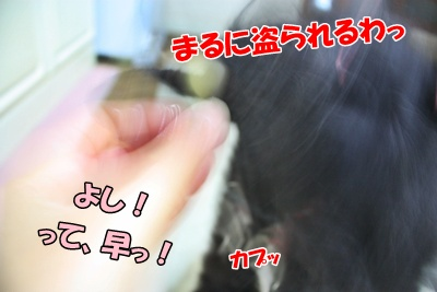 043_20111126164155.jpg