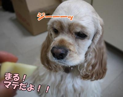 044_20111128212622.jpg