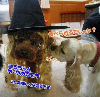 047_20111101203200.jpg