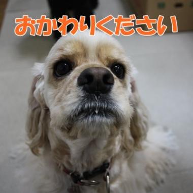 049_20111126164155.jpg