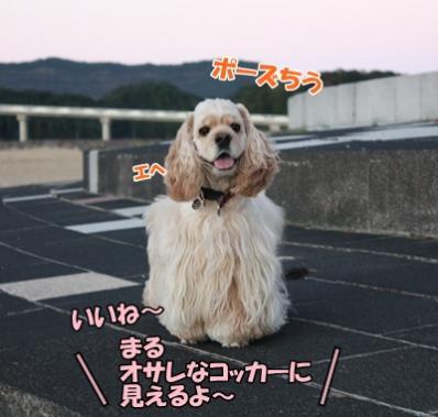 050_20111121213247.jpg
