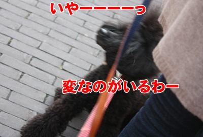 050_20111204153019.jpg