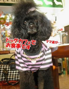 054_20111101204814.jpg