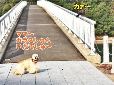 061_20111210224516.jpg