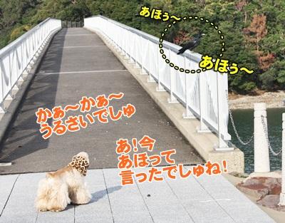 063_20111210224516.jpg
