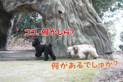 070_20111221221049.jpg