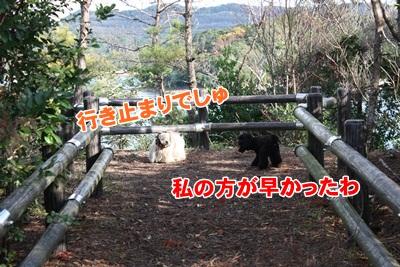 073_20111210225414.jpg