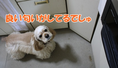 080_20111126164323.jpg