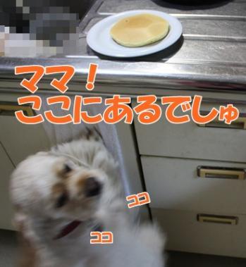 082_20111126164322.jpg