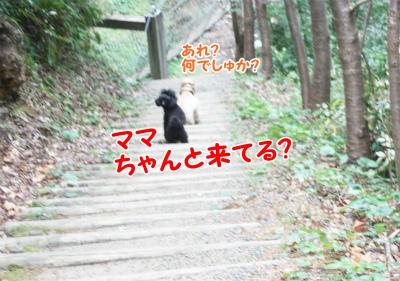 090_20111221221206.jpg