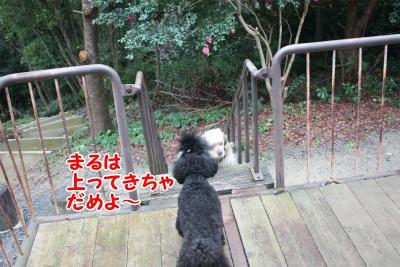 101_20111221221205.jpg