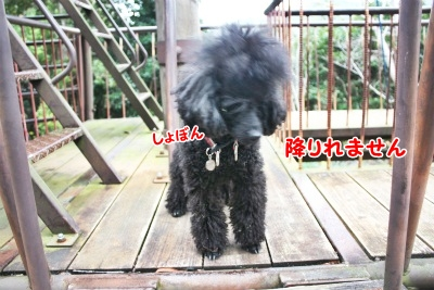 105_20111221221309.jpg
